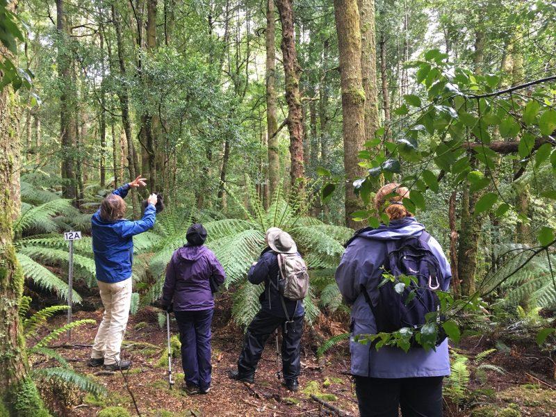 Rainforest Walks Great WEstern Tiers Tasmania