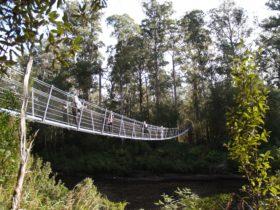 Tahune Airwalk Swing Bridge
