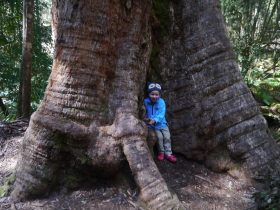 A small boy smiles broadly while hugging a giant tree