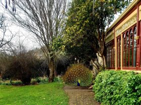 Heathcliff outside conservatory