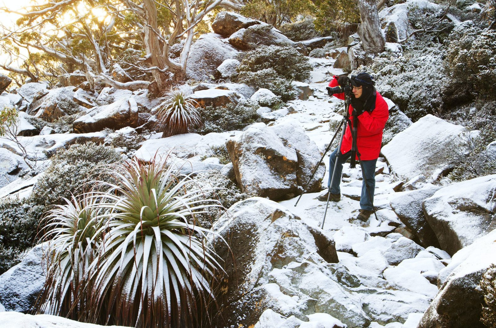 Snow, snow gums, pandani and boulders made for some stunning photography on this photographic tour