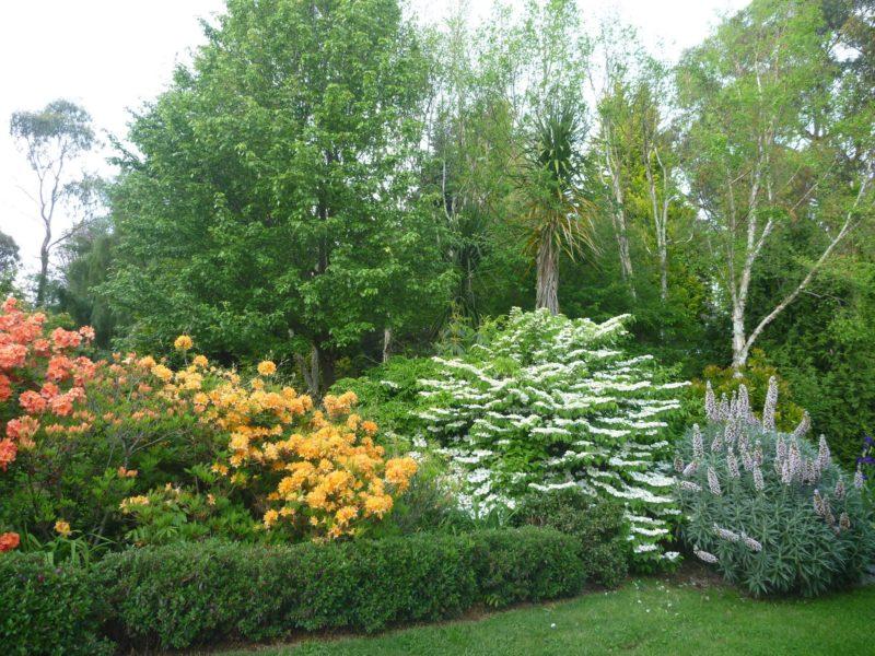 Spring in Grey Sands garden