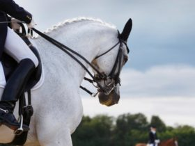Dressage at an Agricultural Show in Tasmania