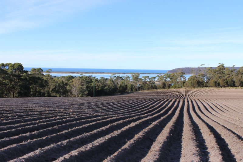 Marion Bay farm