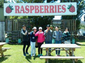 Westaway Raspberry Farm