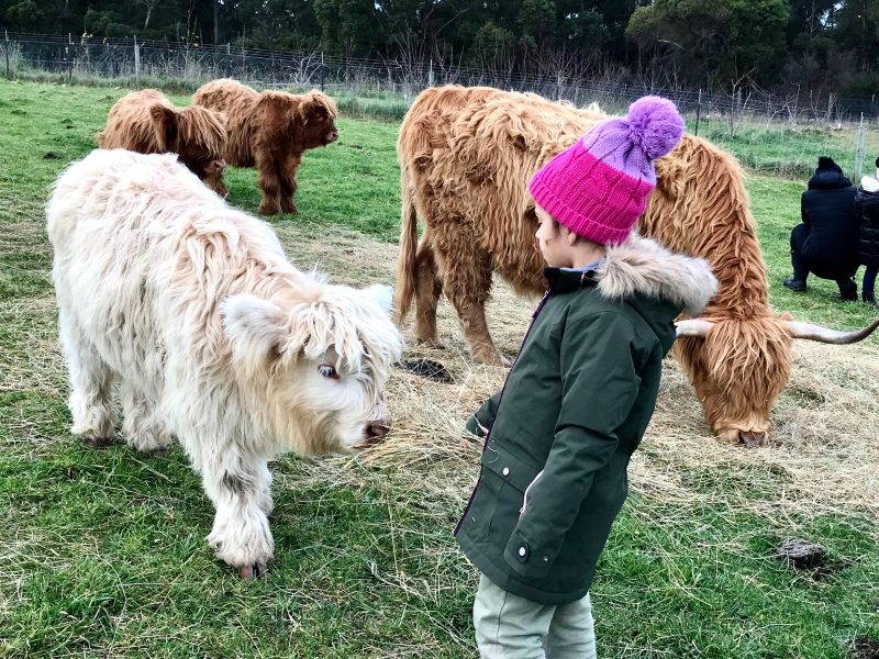 Kids and calves