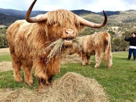 Happy highlands