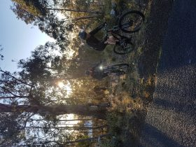 Mountain bike riding early morning Hbart