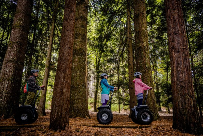 three people riding through the forest on a segways