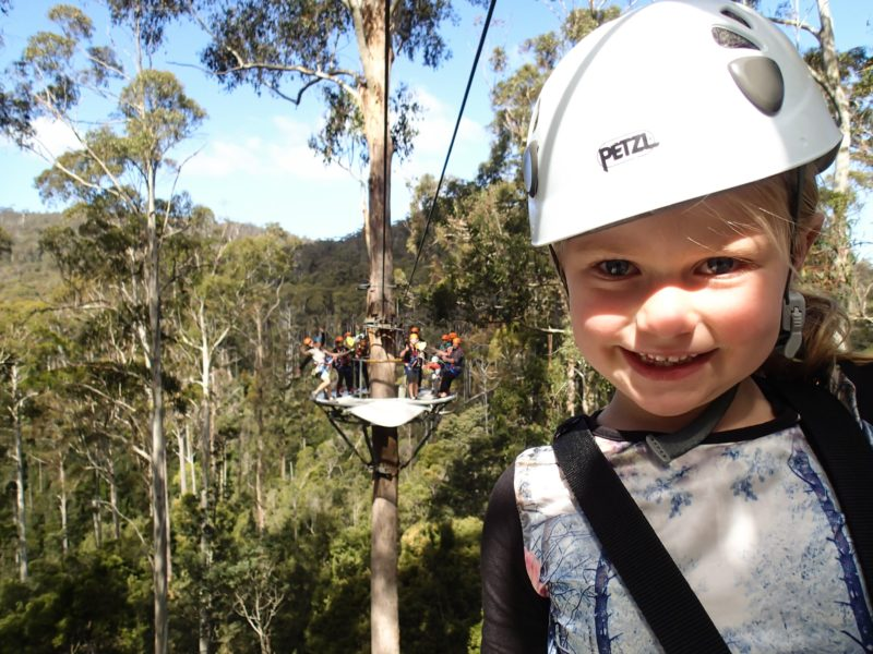 Soar up to 50m high above the forest floor