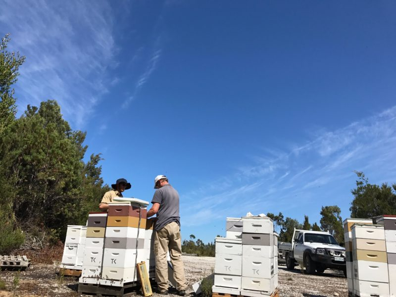 beehives and beekeeper's opening hives