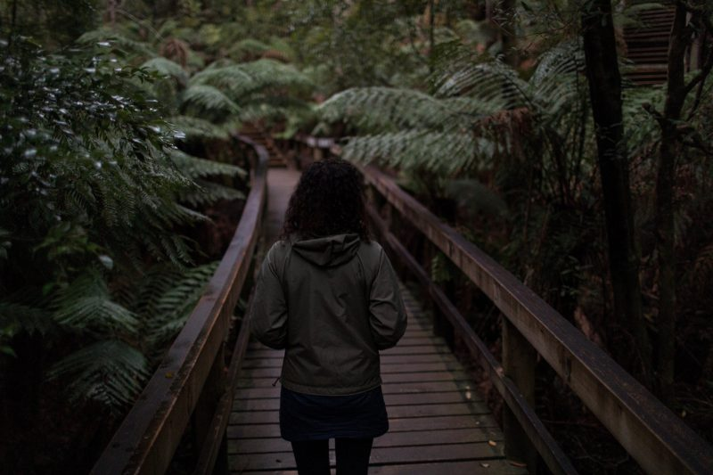 Following a guide along the wooden boardwalk in the Hastings Caves State Reserve forest