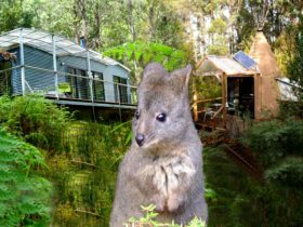 Cabins, Tipes and Wildlife in an extensive private reserve south from Hobart