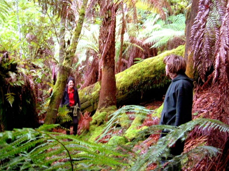 Forest walk at Huon Bush Retreats