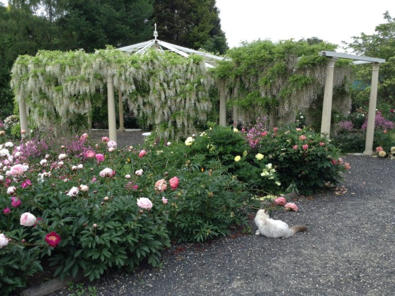 Peonies and Wisteria Pavilion in December