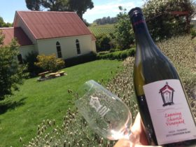 Taste the award-winning Leaning Church Vineyard Sauvignon Blanc
