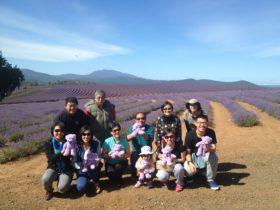 Lavender Farm