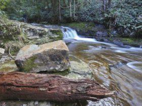 Liffey Falls Reserve