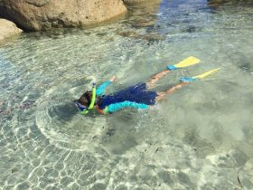 Lillies Bay snorkelling Flinders Island Tasmania
