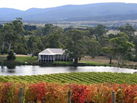 Milton Cellar Door from the Vineyard.