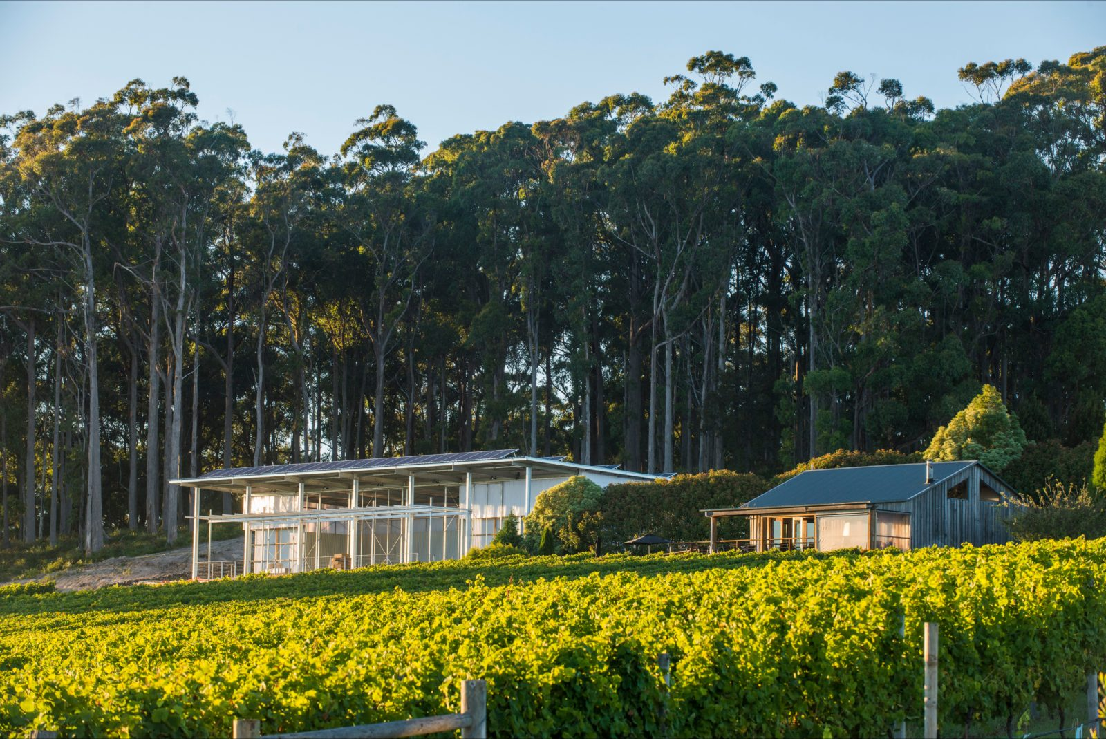 Moores Hill Winery & Cellar Door