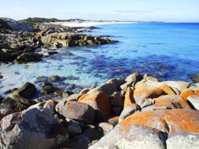 Orange coloured rocks and secluded bays along the coastline of Mt Mount William National Park