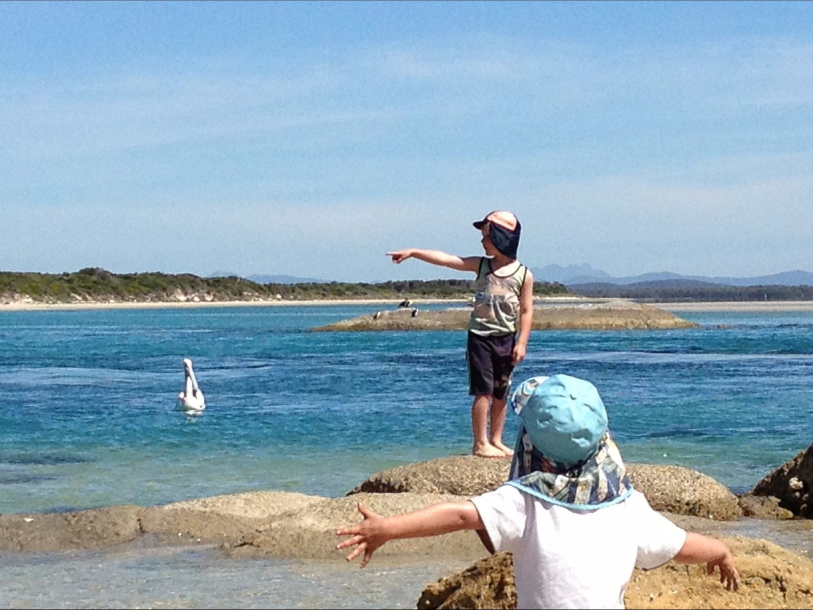 Bird watching North East River Flinders Island Tasmania