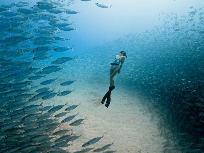 Freediver Chelseas Yamasee