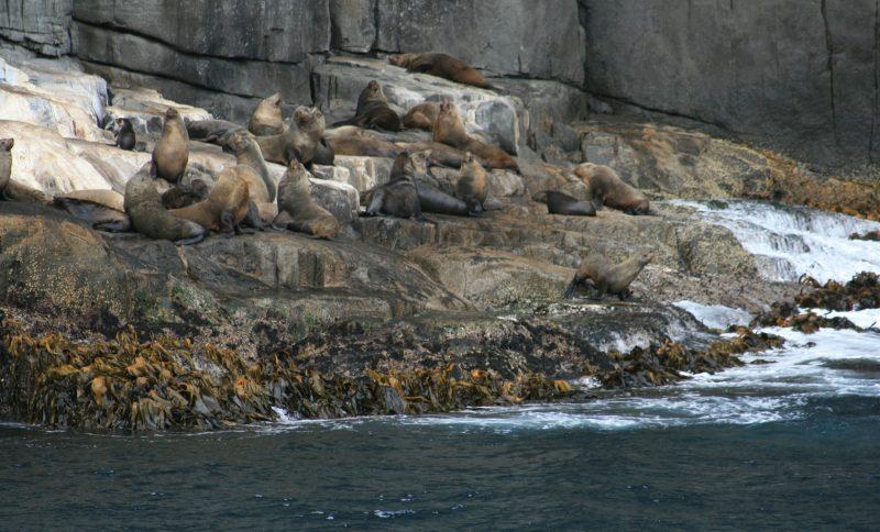 the local wildlife resting on Cape Pillar