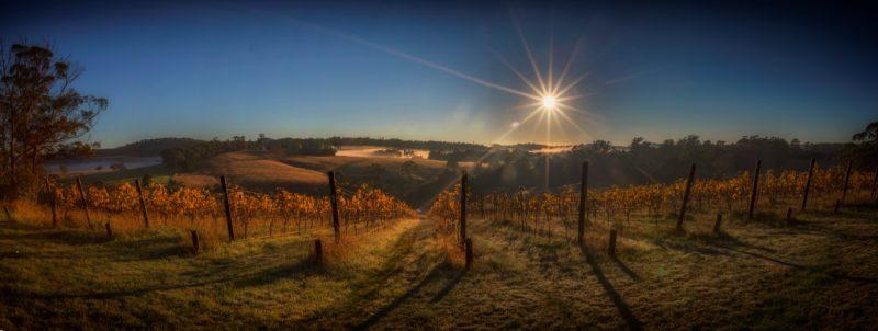 autumn Sunrise over Priory Ridge Vineyard