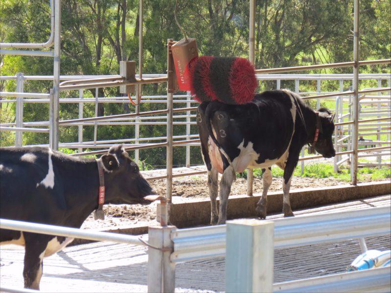 Pyengana Dairy Farm