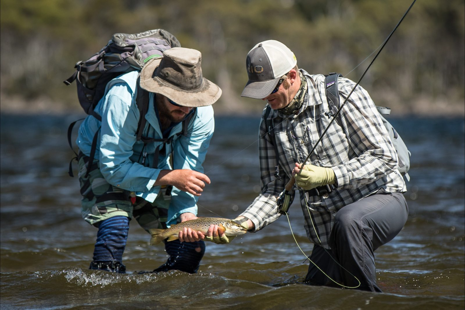 Wild brown trout from Tasmania's wilderness