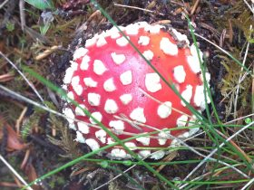 During different times of the year many colourful fungi can be found throughout local rainforest
