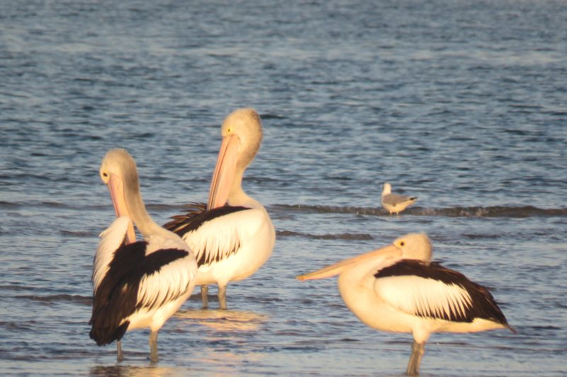 Wildlife and birdlife abound