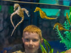Seahorses and child at touch tank