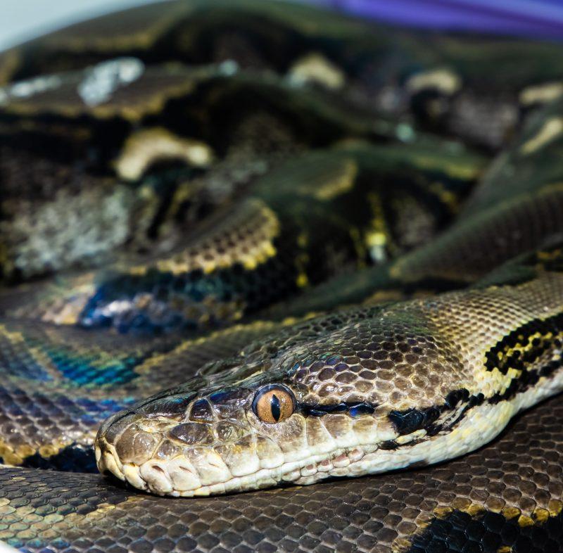 Retic Python