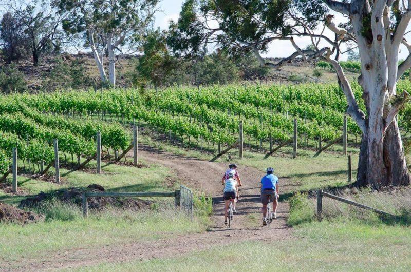 Riding along into road into vineyard