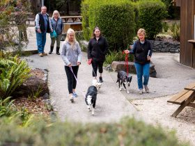 Bring the dog too, yes they are pet friendly - Tahune Adventures Tasmania