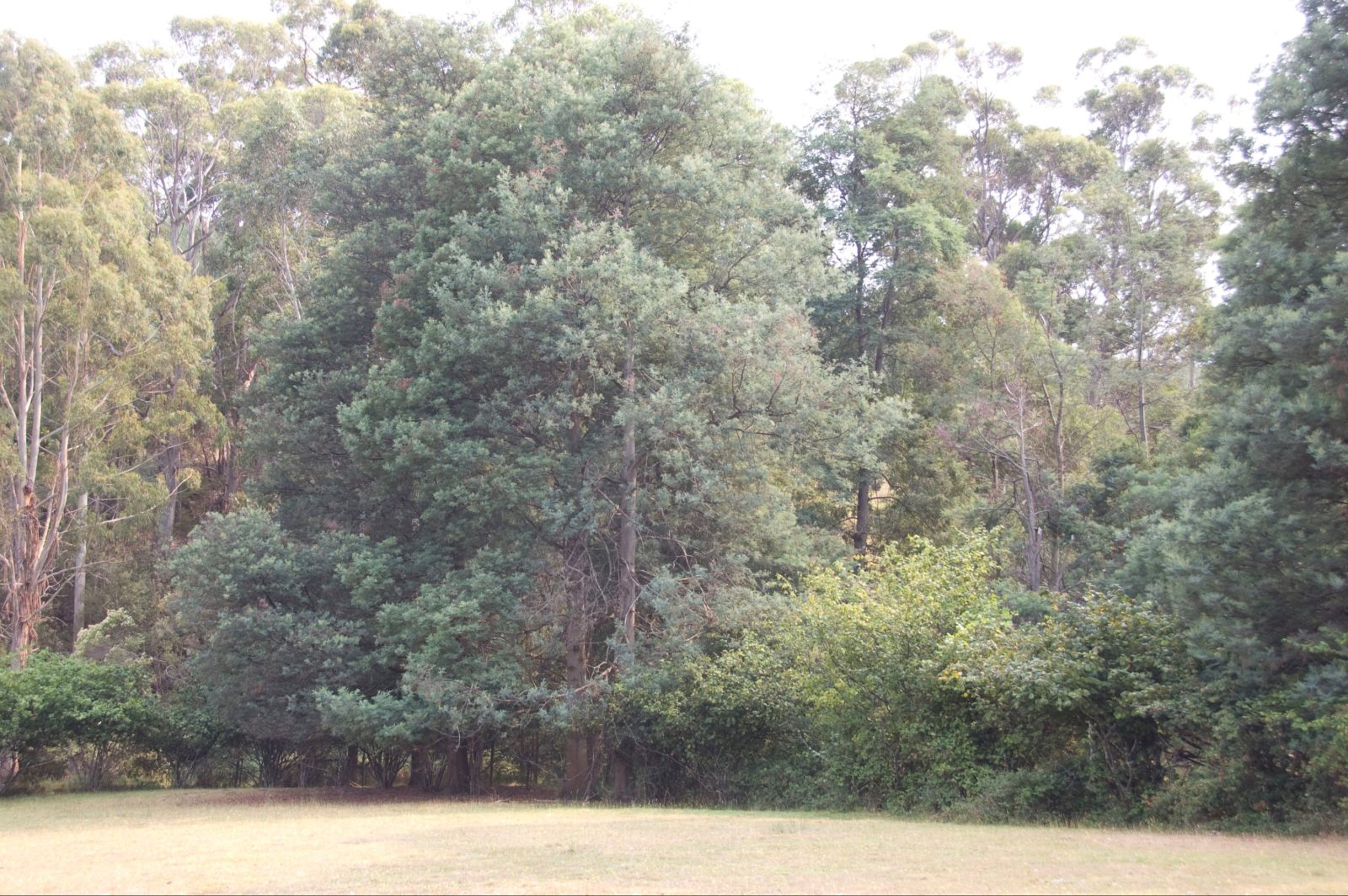 paddock with beautiful tree covered hillside behind. There is also a creek at the base of the hill w