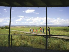 Families exploring the wetlands