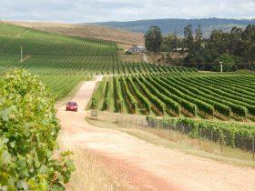 Tamar Valley Wine at Pipers Brook Vineyard