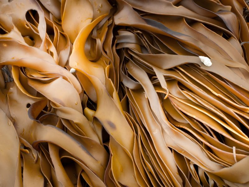 Giant kelp forests on the Tasman Peninisular
