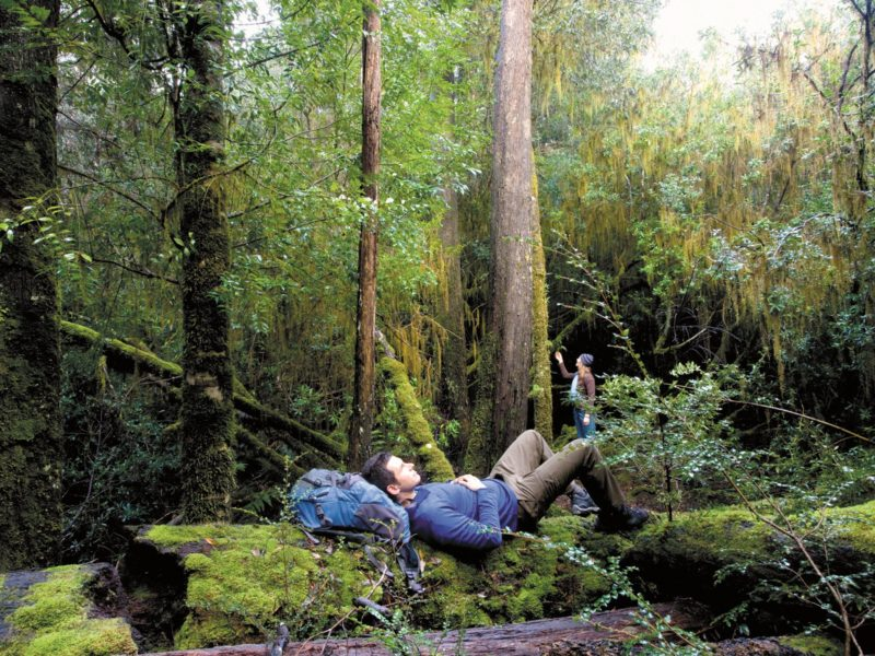 Relax in the Tarkine