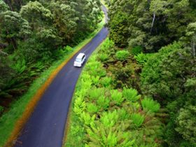 The Tarkine Drive