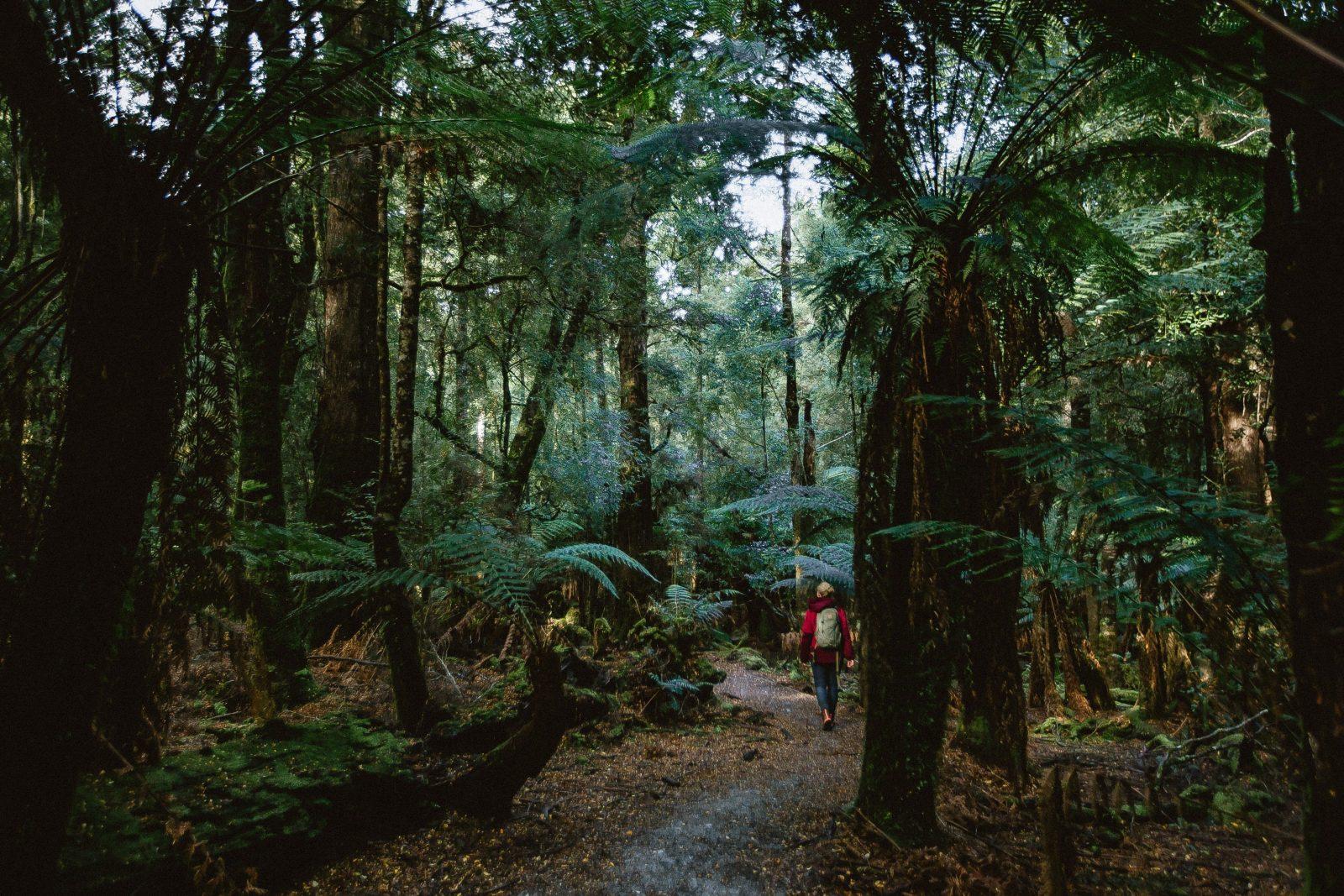 Tarkine Forest Reserve