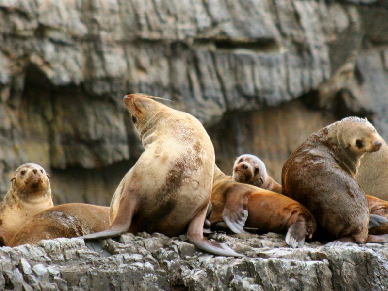 Seals at Tasman Island