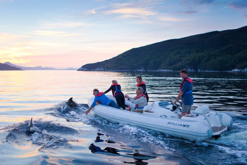Guests in the jetboat are joined by dolphins at sunset