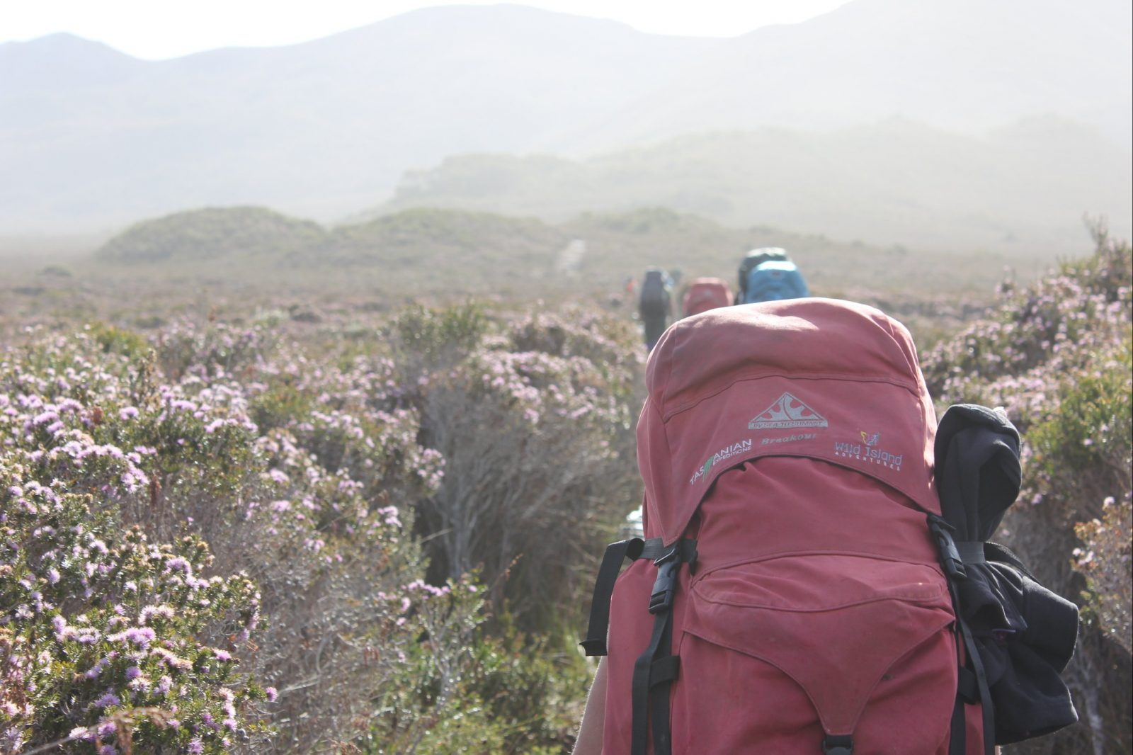 Tasmanian Expeditions