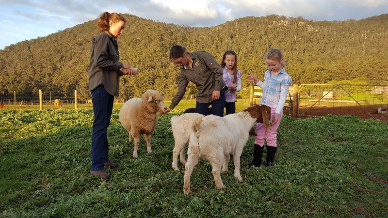 Feeding the friendly farm animals
