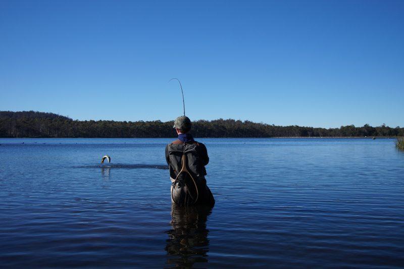 Dry fly fishing in Tasmania